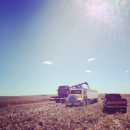 Wordless Wednesday: Harvest is in Full Swing!