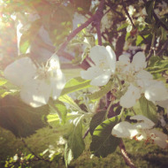 Wordless Wednesday: Comparing Spring 2013 to Spring 2012