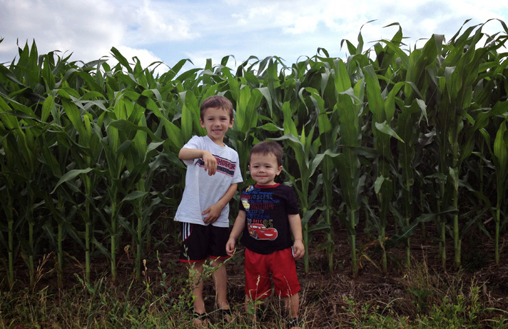 Corn-July 10, 2014