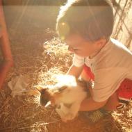 Wordless Wednesday:  Taming Barn Kitties