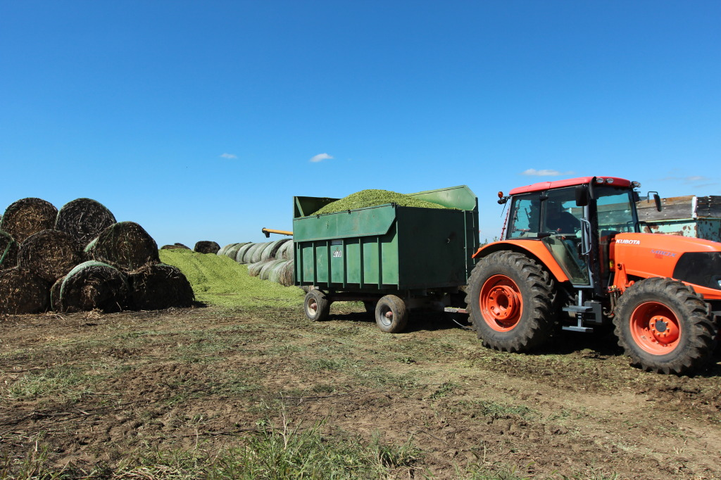 Dumping Silage in Pit