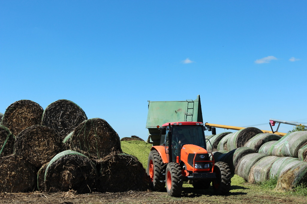 Dumping Silage