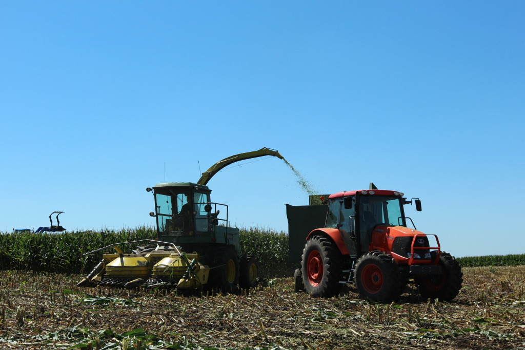 Chopping Silage for Cattle Feed