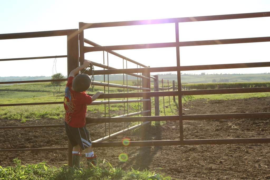 Farmkid helping with chores