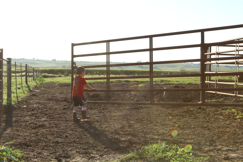 Farmkid helping with chores 2