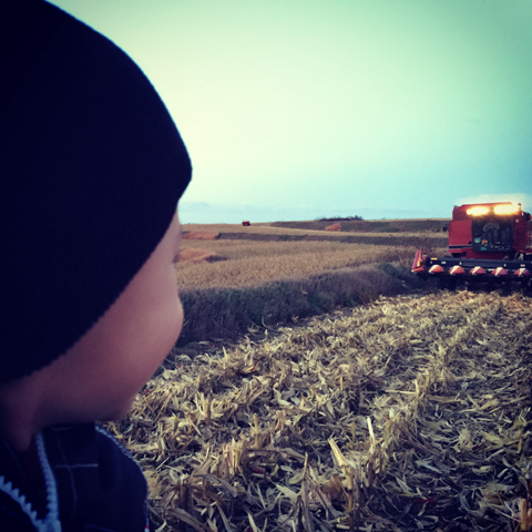Farmkid Waiting to Ride on Combine-www.saras-house.com