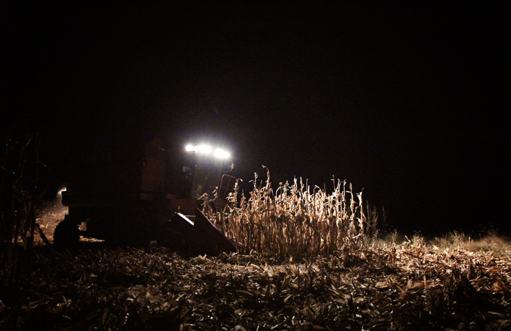 Harvesting at Night-www.saras-house.com