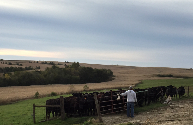 Rounding Up Cattle-www.saras-house.com