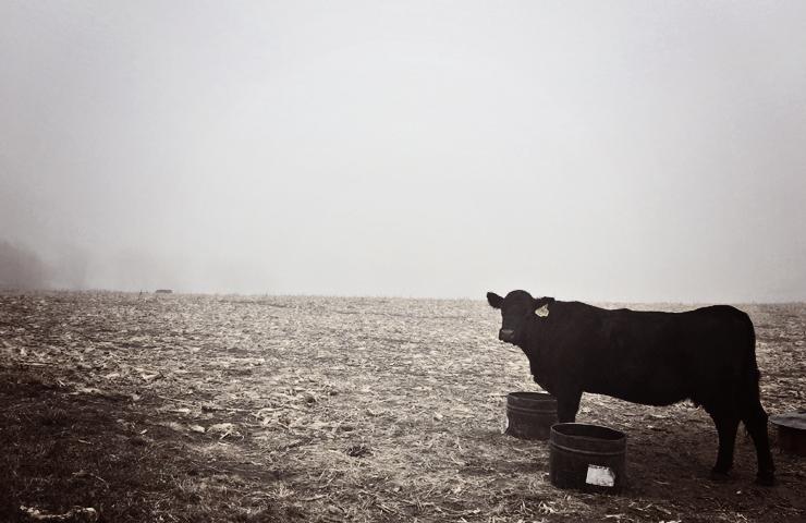 Fog & Cow www.saras-house.com