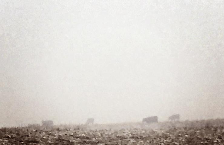 Fog & Cows www.saras-house.com