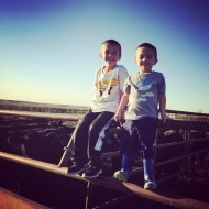 Harvest, Cattle, Football, Eclipse, Babies, Oh My!