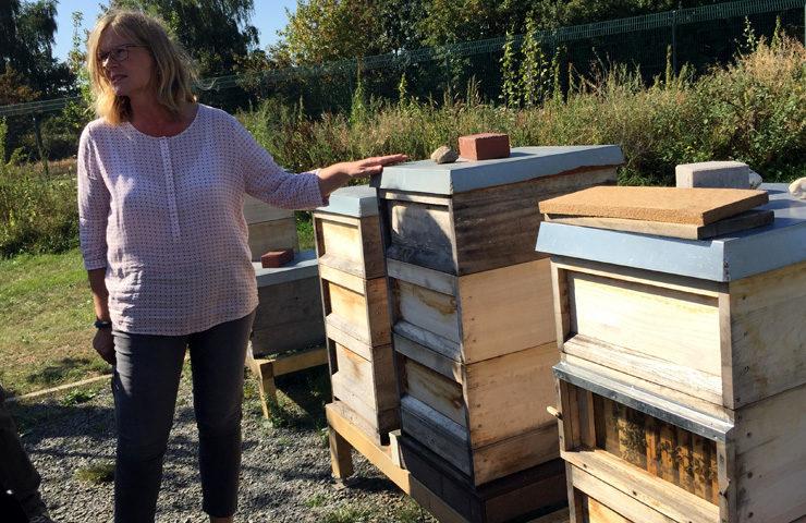 Bayer Bee Hives